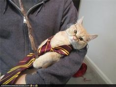 either Harry became an animagus, or polyjuice potion DOES work with animals