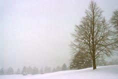 Foggy Morning Landscape (18) by SteveOhlsen