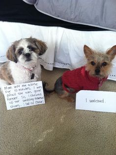 Dog Shaming features the most hilarious, most shameful, and never-before-seen doggie misdeeds. Join us by sharing in the shaming and laughing as Dog Shaming reminds us that unconditional love goes both ways. Funny Animal Pictures, Cute Funny Animals, Dog Pictures, Funny Dogs, Animal Pics, I Love Dogs, Cute Dogs, Cat Shaming, Animal Memes