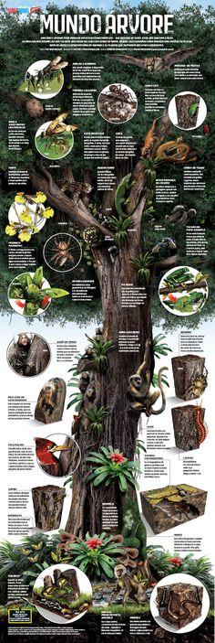 Infográfico o Mundo Árvore.