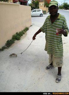 ¿Qué mascota tienes? Yo, un cangrejo.