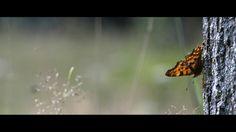 Arne Olivier Fotografie : Butterfly