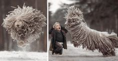 """Andy Seliverstoff is the photographer responsible for the project """"Little Kids and Their Big Dogs"""" featuring little children and their enormous dogs and the unbreakable bond between them. Dogs And Kids, Big Dogs, Cute Dogs, Massive Dogs, Animals And Pets, Cute Animals, Friendship Photography, Photo Animaliere, Giant Dogs"""