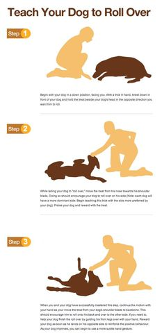 "Teach your dog to ""Roll Over"". Dog training tips."