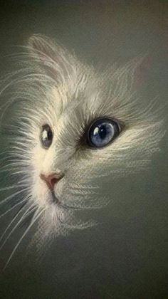 Green eye blue eyed cat sketch. So pretty! and like OMG! get some yourself some pawtastic adorable cat apparel!