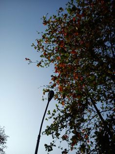 Lovely sky and leaves