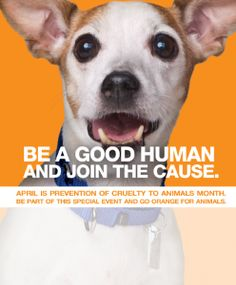 Show Your Orange in Support of Prevention of Cruelty Awareness to Animals Month