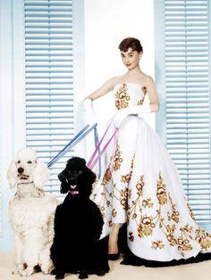 銀幕の妖精と呼ばれ、世界中から愛されたオードリー・ヘップバーンがこの世を去って今日で24年。世代を超えた美しさで今もなお人々を惹きつけてやまない彼女の女優人生を数々の名作とともに振り返ります。