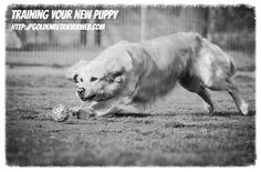 Training Your New Puppy