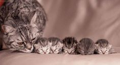 Mother and her kittens