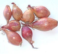 Shallots - French Red