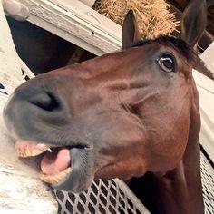 (2) Kentucky Derby (@KentuckyDerby)   Twitter  Brody's Cause
