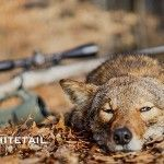 Calling coyotes not only provides the opportunity to keep predator numbers in check, it also offers exciting and unforgettable experiences. Predator Hunting, Coyote Hunting, Hunting Tips, Trophy Hunting, Bow Hunting, Coyote Trapping, Lords Of Dogtown, Call Of The Wild, Coyotes