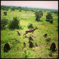 LEAP!!  Follow our African Safari on Facebook for you chance to win free binoculars or free sunglasss!