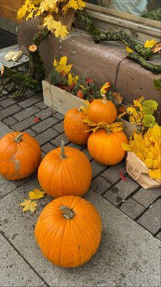 We Fall In Love, Fall Winter, Autumn Cozy, Autumn Aesthetic, Best Seasons, Hello Autumn, Autumn Inspiration, Fall Season, Fall Halloween