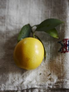 Lemon still life. News | Jennifer Davick Photography. Www.jenniferdavick.com