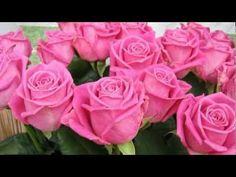 Эти розы-для Тебя - YouTube