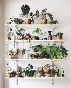 Beautiful Indoor Plants Design in Your Interior Home Indoor plants design makes your living space more comfortable, breathable, and luxurious. See these 30 ideas on how to display houseplants for Beautiful Indoor Plants Design in Your Interior Home Hanging Plants, Indoor Plants, Potted Plants, Diy Hanging, Foliage Plants, Cactus Plants, Indoor Plant Wall, Small Plants, Indoor Gardening