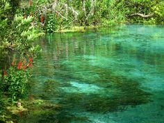 Ichnetucknee Springs - floated down almost every year of my life (at least while state side)  South of Lake City, FL