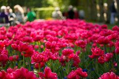 Imagem de flowers, pink, and photography