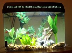 tips for an African Dwarf frog - just got two and we love them! As yet nameless .....