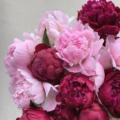 Amazing Flowers, Beautiful Roses, Fresh Flowers, Spring Flowers, Beautiful Flowers, Flores Wallpaper, Luxury Flowers, Flower Backgrounds, Wallpaper Backgrounds