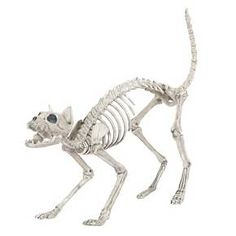 halloween cat skeleton dcor target just bought him today from cvs but target has him cheaper too cute