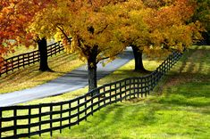 The drive along Rte. 50 between Loudoun and Fauquier Counties will bring you through the heart of Virginia's hunt country with beautiful countrysides, centuries old villages, field stone houses, magnificent estates and horse fams, and scenic views at the top of Ashby's Gap at the top of the Blue Ridge Mountains.