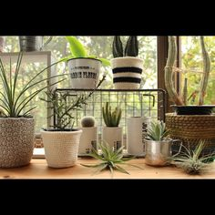 ebimusumeさんの、棚,出窓,多肉植物,鉢カバー,リメ缶,編み物部,のお部屋写真