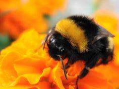1024x768 macro Sfondi Scarica - immagini di fiori, sfondi ape ...