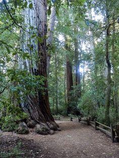 California's Big Basin Redwoods State Park
