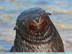 This seal is looking especially pleased with himself by the way he looks to be smiling! LOL!