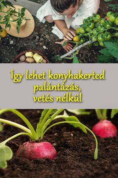 Gardens, Backyard, Vegetables, Plants, Tips, Patio, Outdoor Gardens, Backyards, Vegetable Recipes
