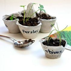 See how outdoor plants grow by bringing nature indoors.                 What You'll Need: 1 egg carton; scissors; black marker; potting soil; four seed packets; spoon; plate; water                 Make It: Cut off the top of the egg carton, leaving just the bottom. Separate four egg cups from the carton to create a pot collection and use scissors to trim the edges so they are even and smooth. Write the name of each plant on one side of each of the egg cups and fill each with a few scoops of…