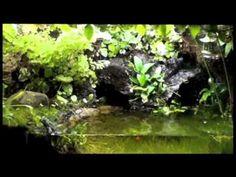 10 gal Paludarium - Dec 2011 - YouTube