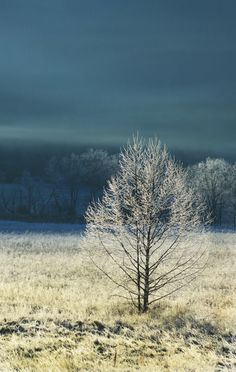 Beautiful tree covered with frost in Cades Cove
