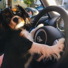 16 Things All Cavalier King Charles Spaniel Owners Must Never Forget …