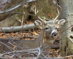 Great Deer Hunting Tips For Tree Stand/Ground Blind Placement, Spotting Deer and Taking The Critical Shot It's that time of year when ou... #deerstands #deerhuntingblinds