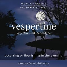 Today's wordoftheday is 'vespertine' merriamwebster dictionary Unusual Words, Weird Words, Rare Words, Unique Words, New Words, Powerful Words, Cool Words, Fancy Words, Pretty Words
