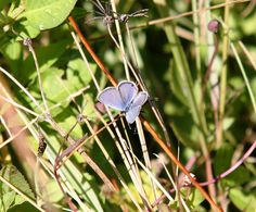 Butterfly, The Everglades National Park (Homestead, Florida)