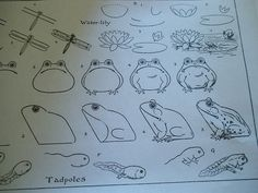 Free old drawing book showing how to draw a frog and tadpole