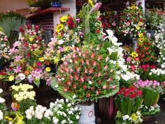 Jamaica, Most Beautiful Flowers, Day Of The Dead, Grocery Store, Google, Paradise, Videos, Youtube, Make Flowers