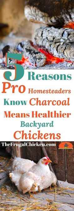 Charcoal is a super-healthy supplement for your backyard chickens. Here's why and how you can make it at home.
