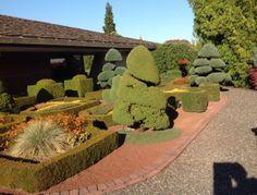 from our visit to Iseli Nursery, Growers in Oregon Oregon, Golf Courses, Miniature, Nursery, Baby Room, Miniatures, Child Room, Babies Rooms, Kidsroom