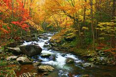 Fall is the perfect time to visit Great Smoky Mountains National Parkand see the gorgeous colors! Photo from Middle Prong Trail