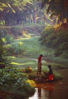 Morning dew at a coconut plantation. Kerala, India.