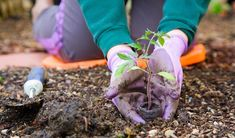 Preparing your garden soil is an important part of growing a successful garden. Read more here to learn what you need to do to get the healthiest soil. Cold Frame Gardening, Gardening Gloves, Garden Soil, Garden Weeds, Garden Care, Gardening For Beginners, Gardening Tips, Organic Gardening, Composting Process