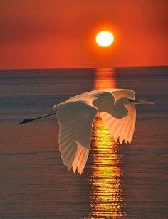 Flight of the setting sun.. Great Shot!