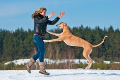Having a dog that lunges on anybody that approaches is not only annoying, it can be dangerous; they could knock over or injure someone. And actually it is not difficult to teach a dog to not jump in terms of the …