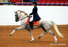 Note the extension and the stepping up and under; the slack in the reins; the angle of both forward legs. Lovely.